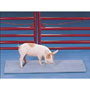 Salter Brecknell Vet Deck Animal Weighing Systems